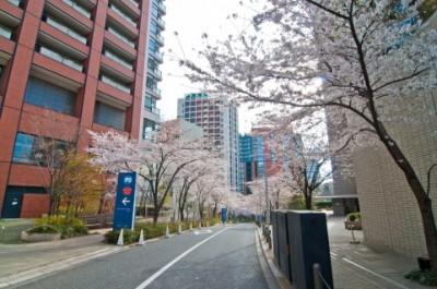 桜とオフィス街